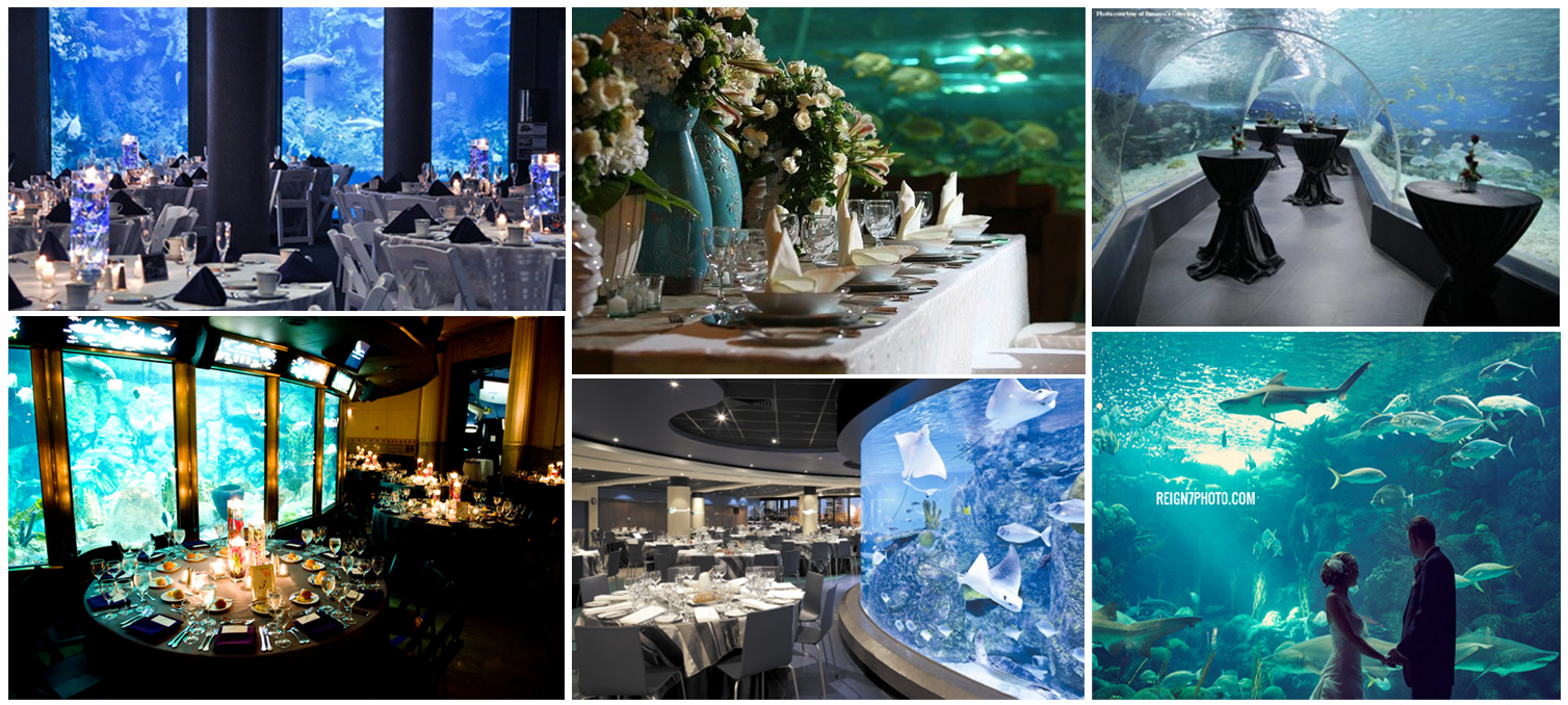 wedding venue aquarium (1)